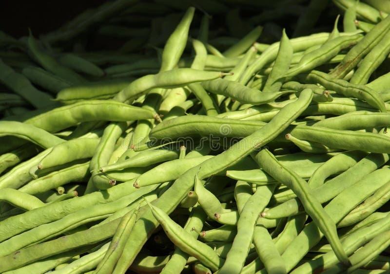 Fresh Green Beans stock photos
