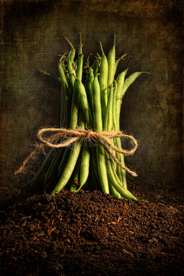 Fresh Green Beans Tied Against Grunge Background Royalty Free Stock Photos