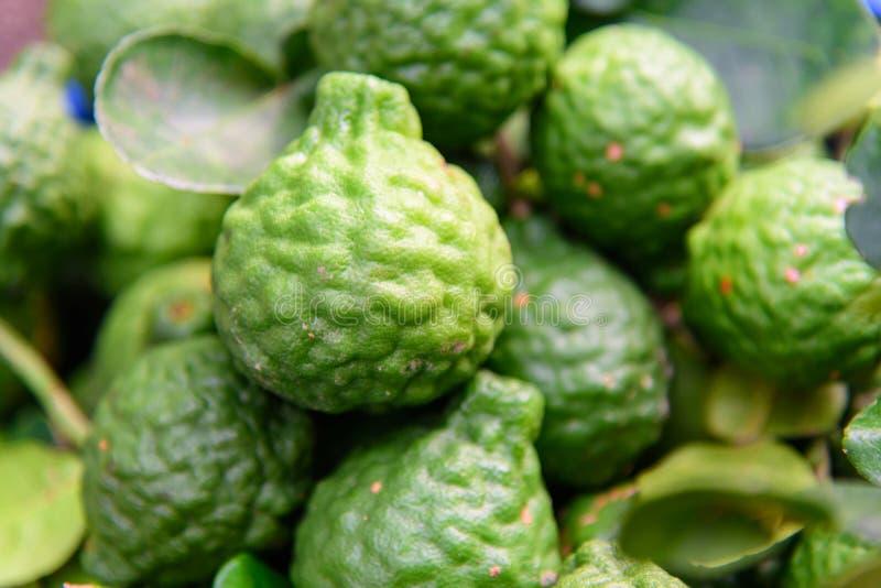 Fresh green bergamot. In basket stock photo