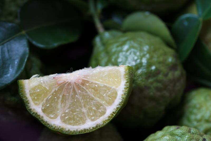 Fresh green bergamot. Thai herb for spa and hair treatment , hair loss problem, hairfall control, Nutrition organics product stock images