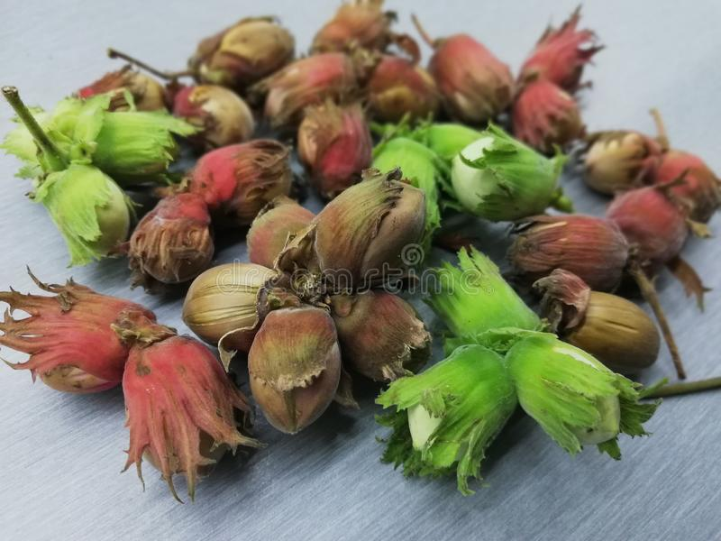Fresh green and brown hazelnuts. Red, greenbrown, vitamines, core stock photo