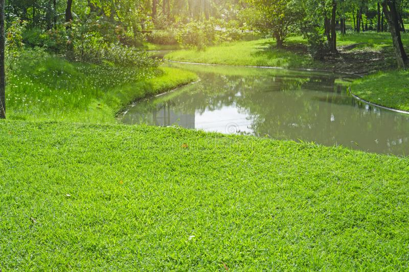 Fresh green carpet grass yard, smooth lawn in a beautiful garden and good care landscaping, beside a curve long lake and trees stock photos