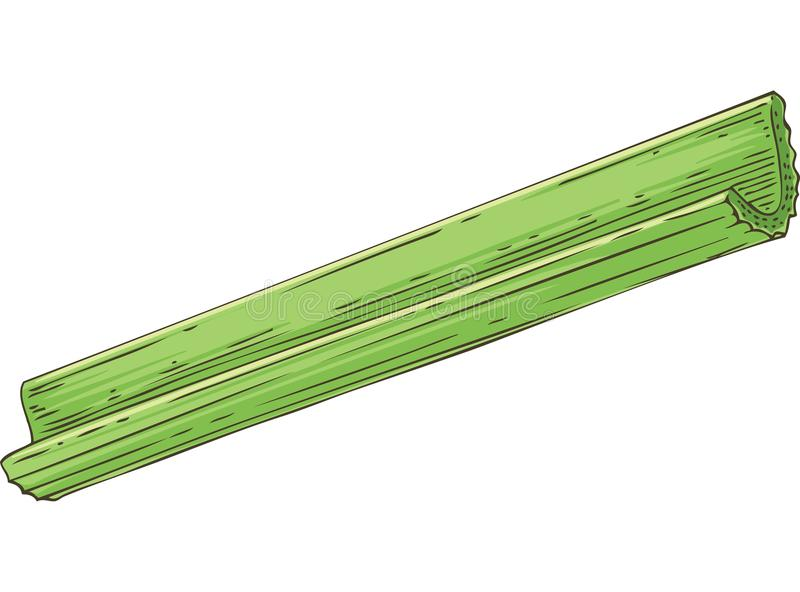 Fresh Green Celery Stick. Fresh Green Crunchy Celery Stick Isolated Object vector illustration