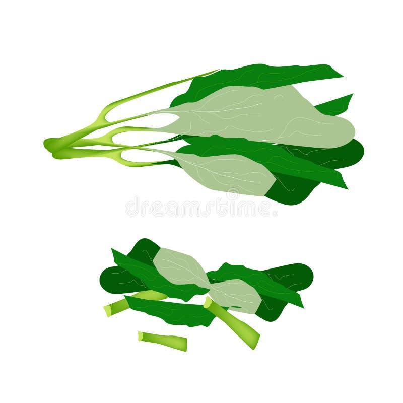Fresh Green Chinese Broccoli on White Background royalty free illustration