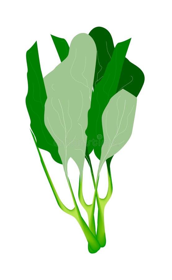 Fresh Green Chinese Kales on White Background vector illustration