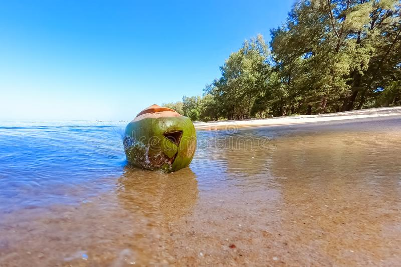 Fresh green coconut with a carved Halloween face.  Lying in the sand on the beach of the sea at sunny day. A wave crashes into it royalty free stock photo