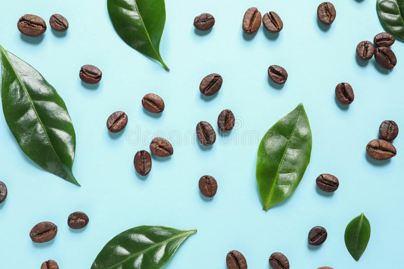 Fresh green coffee and beans on light blue background, flat lay. Fresh green coffee leaves and beans on light blue background, flat lay stock image