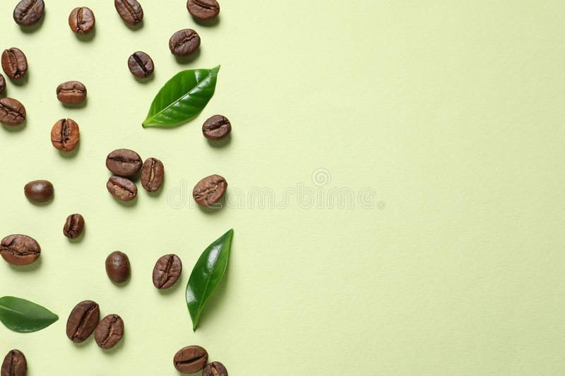 Fresh green coffee leaves and beans on light green background, flat lay. Space for text royalty free stock images