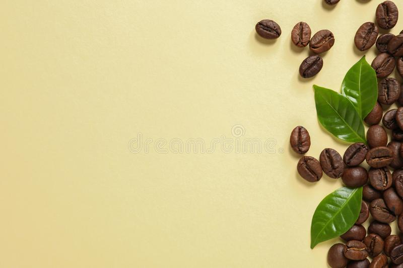 Fresh green coffee leaves and beans on light yellow background, flat lay royalty free stock photo