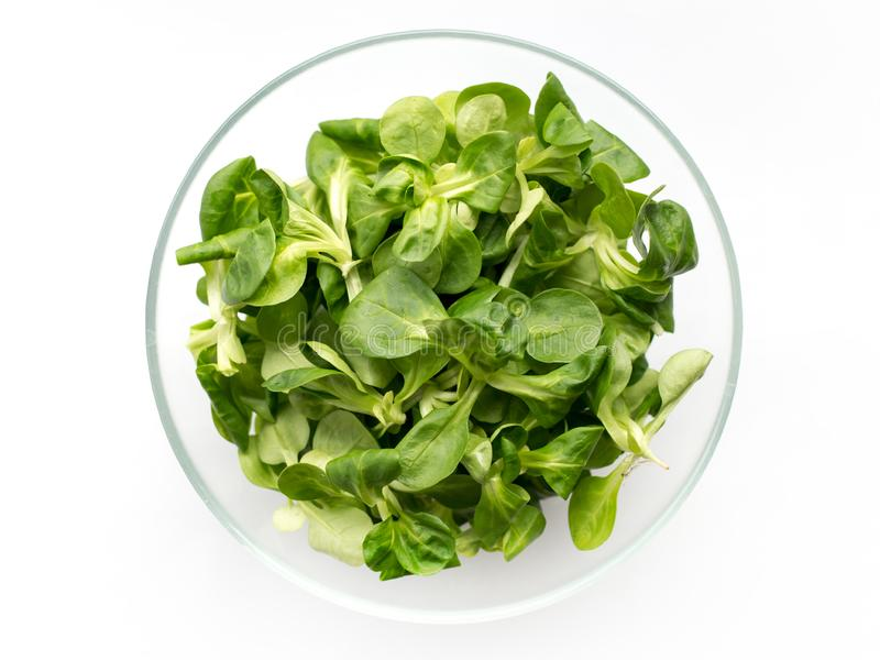 Fresh green Corn salad leaves or lamb`s lettuce in bowl. Top view, lamb`s lettuce isolated on white background stock photo
