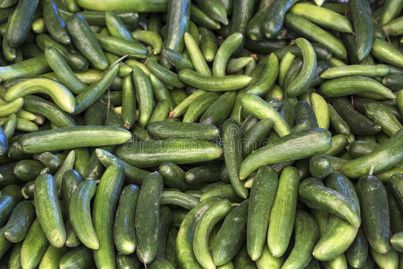 Fresh green cucumber collection outdoor on market macro royalty free stock image