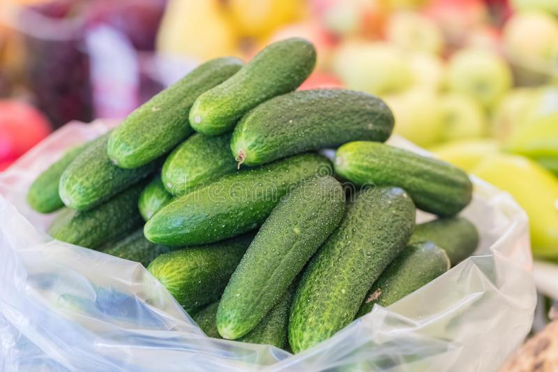 Fresh green cucumbers of a new harvest are put by group. In the market royalty free stock photos