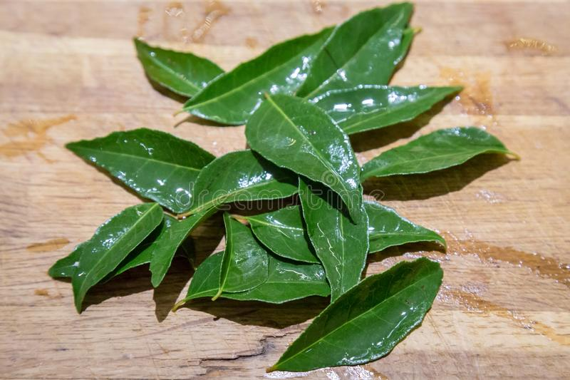 Curry Leaves royalty free stock image