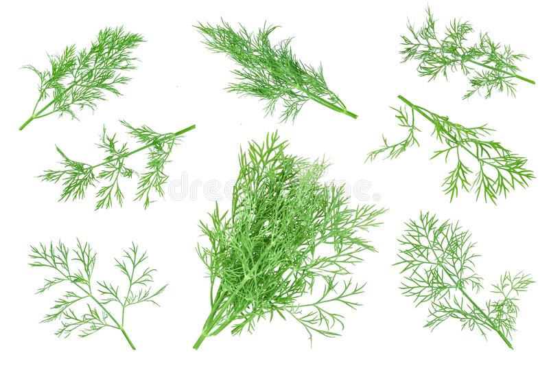 Fresh green dill isolated on white background. Top view. Flat lay royalty free stock photos