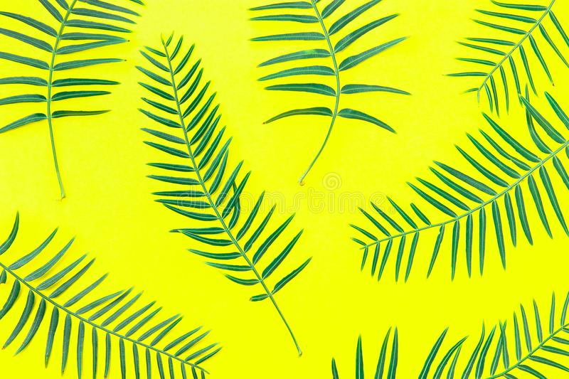Fresh Green Fern Leaves Arranged in Pattern on Solid Yellow Background. Botanical Floral Plant Backdrop. Poster Banner Wallpaper. Template. Natural Cosmetics stock images
