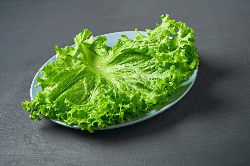 Fresh green fluffy leaves of salad lettuce, round plate lies on scratched dark concrete. Close-up stock photography