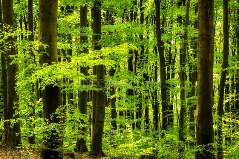 Fresh Green In The Forest Stock Photo