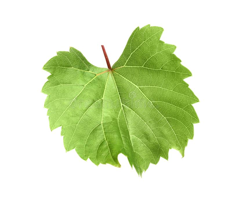 109 390 Grape Leaf Photos Free Royalty Free Stock Photos From Dreamstime