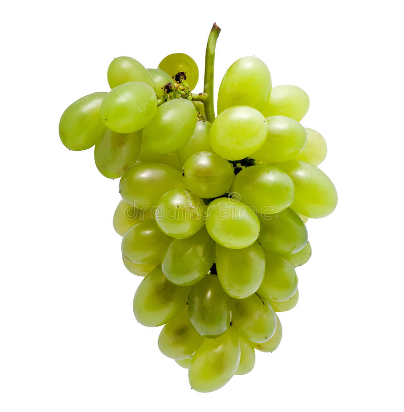 Download Fresh green grapes stock image. Image of fresh, nature - 21388877