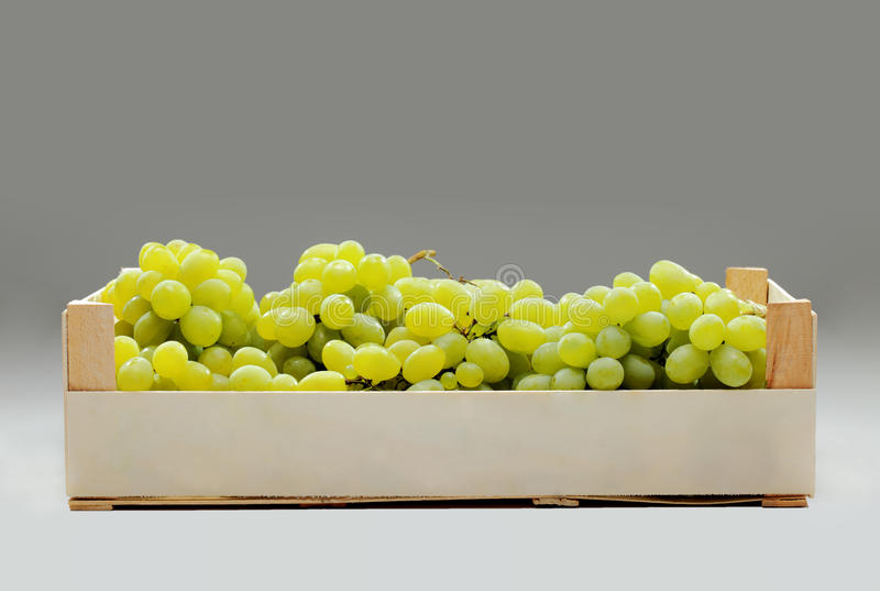 Download Fresh green grapes stock photo. Image of healthy, crate - 23586042