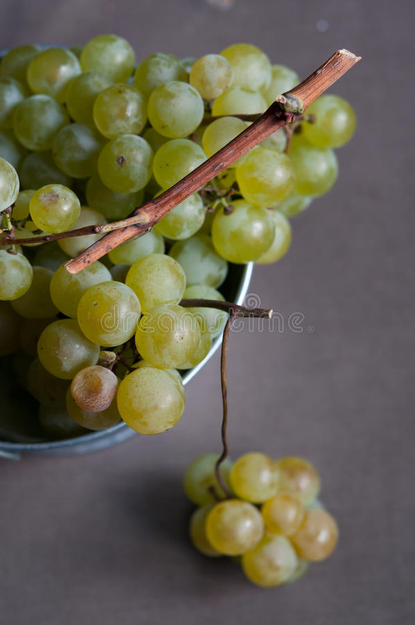 Download Fresh green grapes stock photo. Image of clusters, grape - 33427938