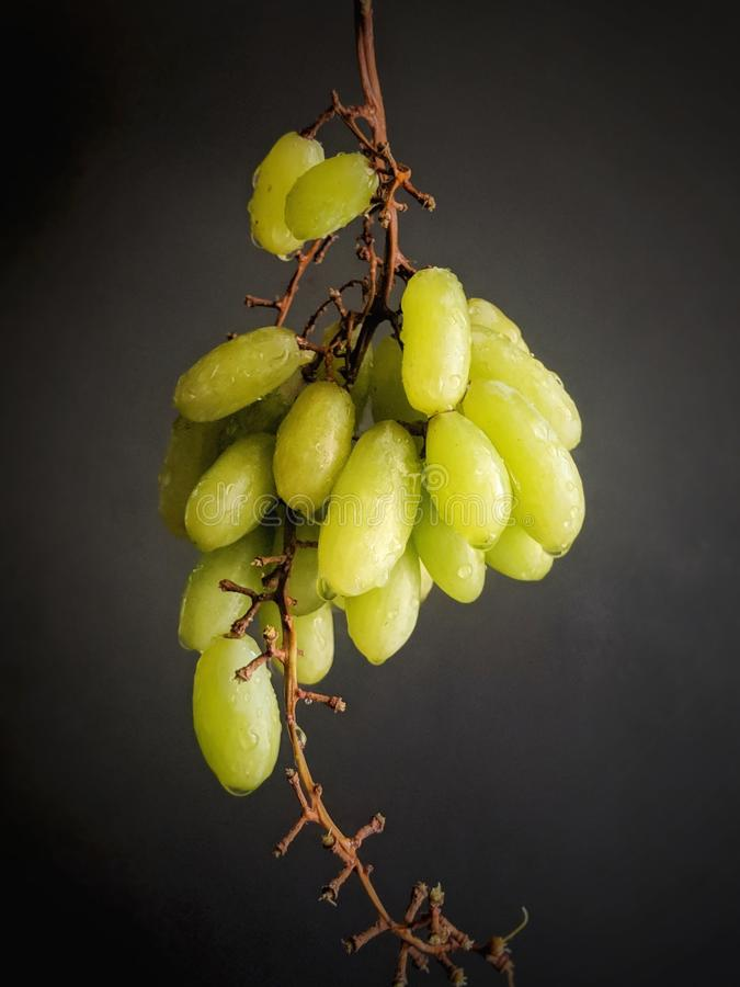Fresh green grapes with water drops stock photography