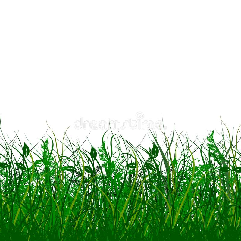 Fresh Green Gras Royalty Free Stock Photos