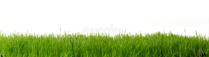 Download Fresh Green Gras Royalty Free Stock Photos - Image: 4540948