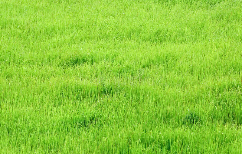 Download Fresh green grass stock image. Image of abstract, green - 26592879