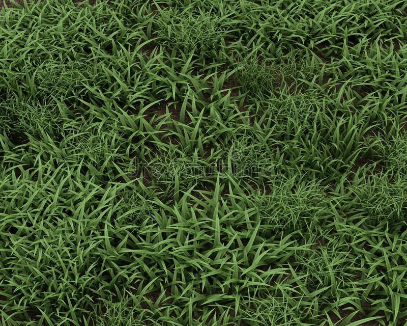 Fresh Green Grass Background Stock Images