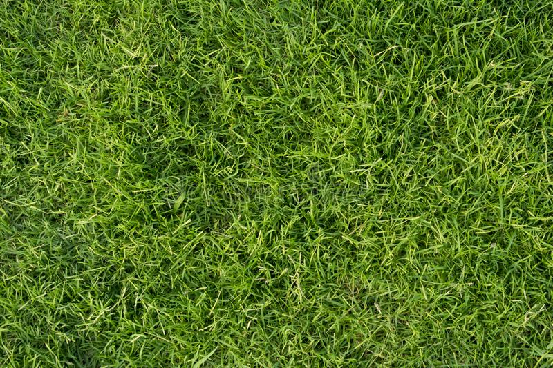 Fresh green grass for background. Park lawn texture. Close-up image of fresh green grass for background. Park lawn nature texture stock images