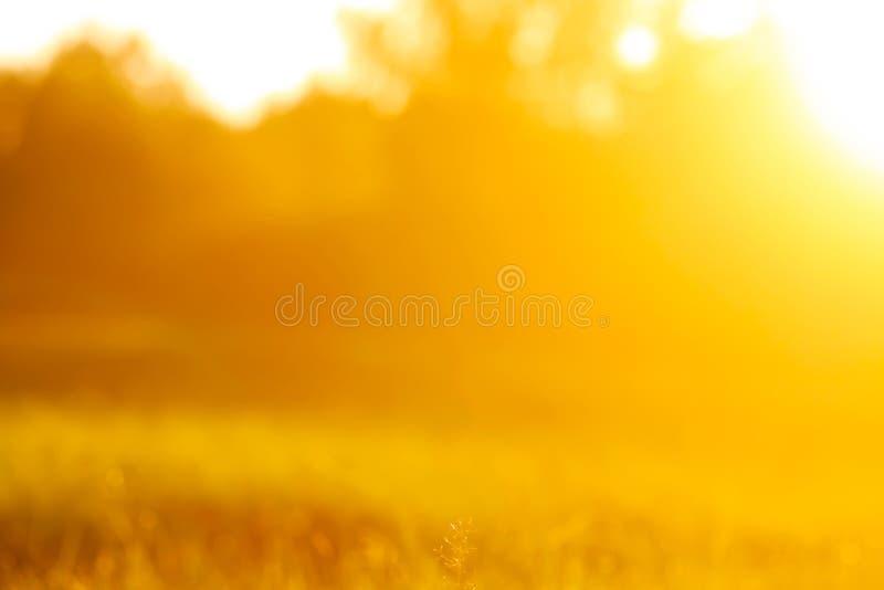 Fresh grass with dew drops in the sunset golden soft sunshine. Summer nature background. Fresh green grass with dew drops in the sunset golden soft sunshine stock photo