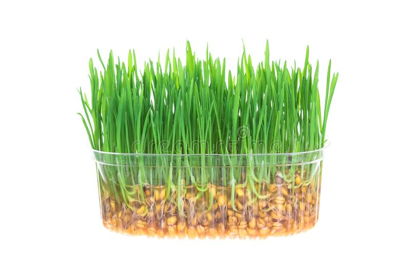 Fresh green grass isolated on white background stock image
