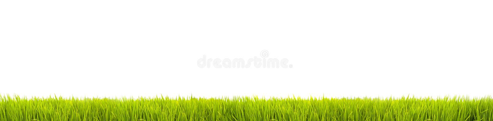 Green grass: fresh green grass large panorama banner as frame border in a seamless empty white background royalty free stock photography
