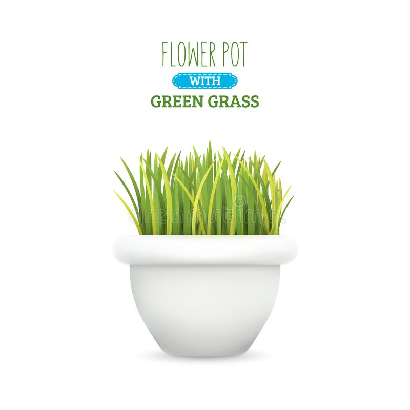 Fresh Green Grass In A Pot. A Set With Several Forms Of