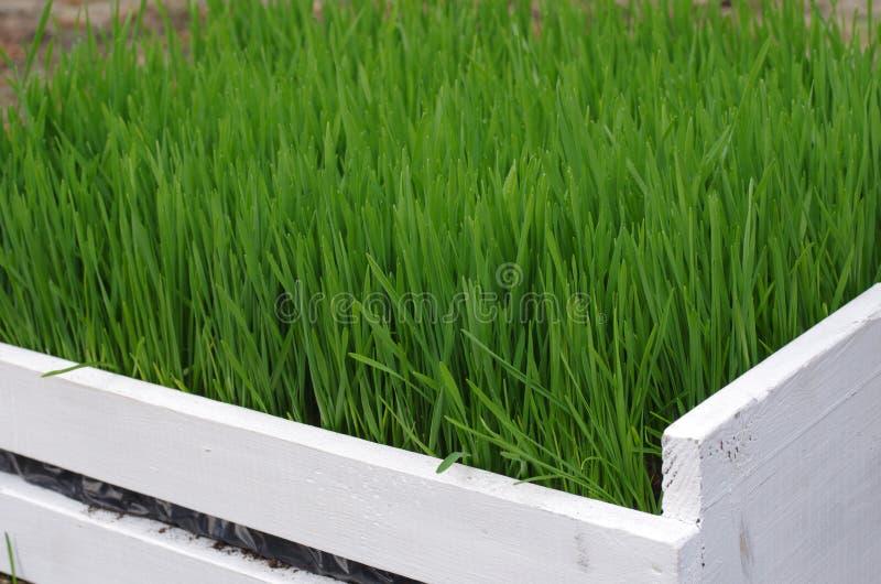 Download Fresh green grass stock image. Image of wood, grass, grassland - 30537553