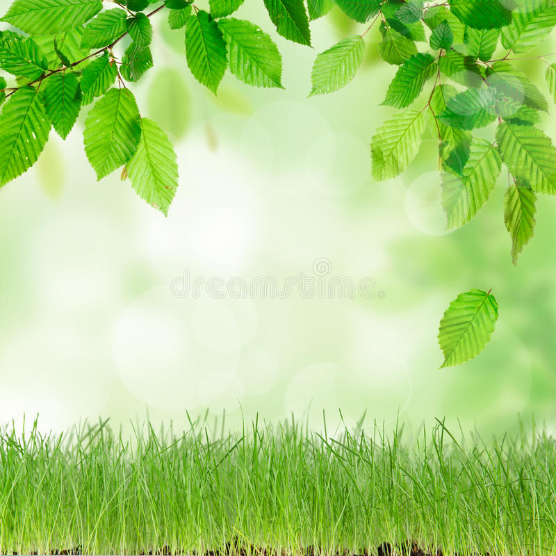 Fresh green grass. With wooden desk royalty free stock photography