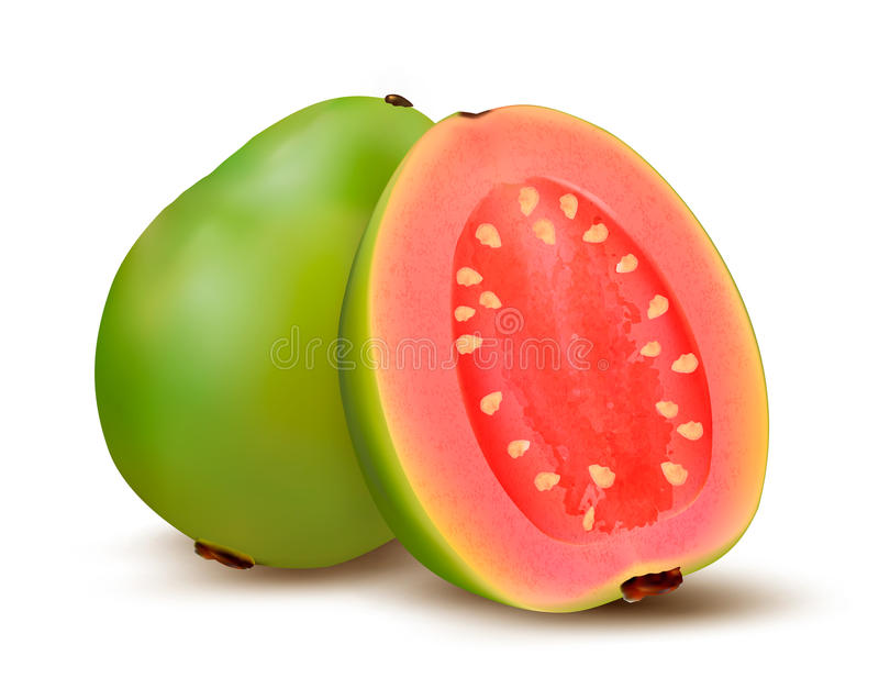 Fresh green Guava fruit. vector illustration