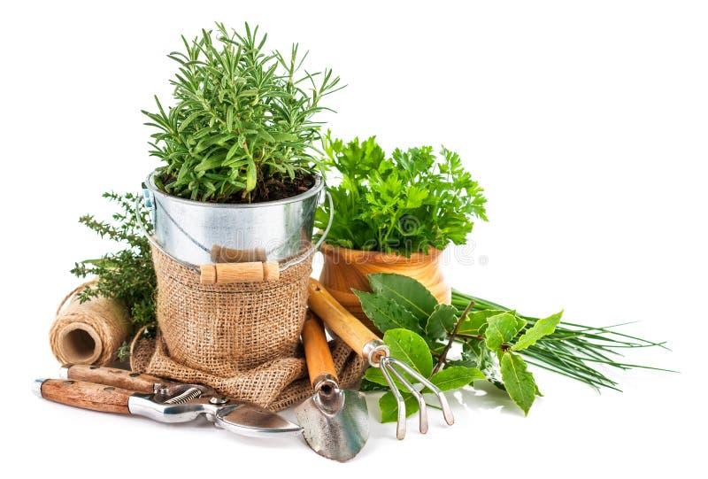 Fresh green herbs with garden tools. On white background stock photos