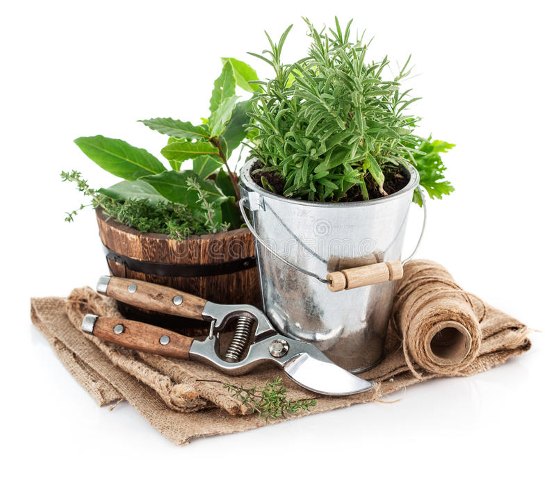 Fresh green herbs with garden tools stock photos