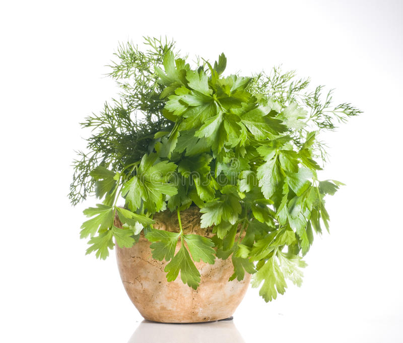 Fresh green herbs in a pot over white royalty free stock photos