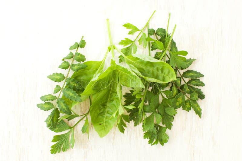 Fresh green herbs stock photos