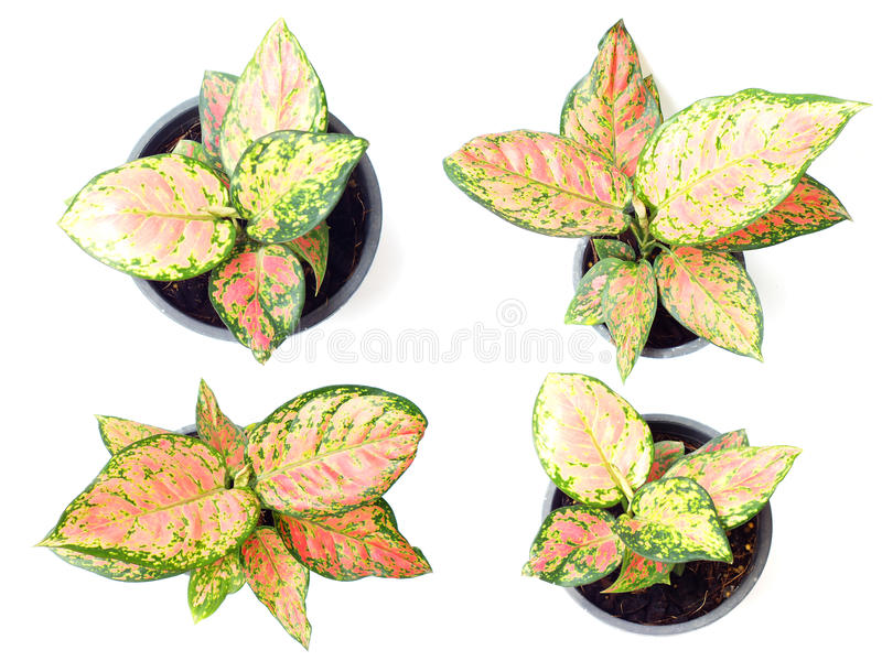 fresh of green house plants top view isolated on white backgroun royalty free stock photo