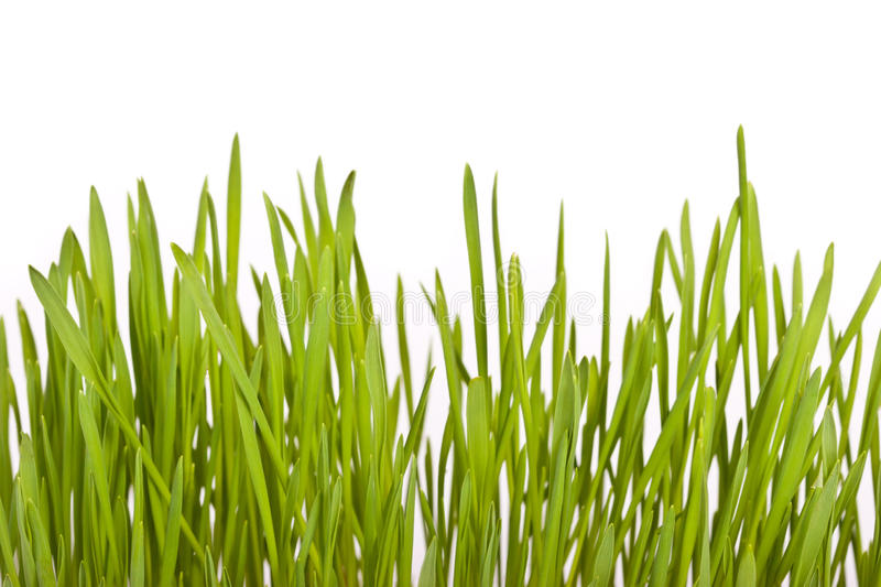 Download Fresh Green Lawn Grass Stock Image - Image: 17221751