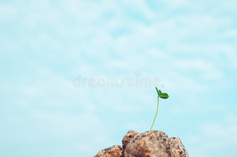Fresh green leaf in grey grow form stone, blue sky background. Bio grass symbol of environment and new life. Ecology royalty free stock photos