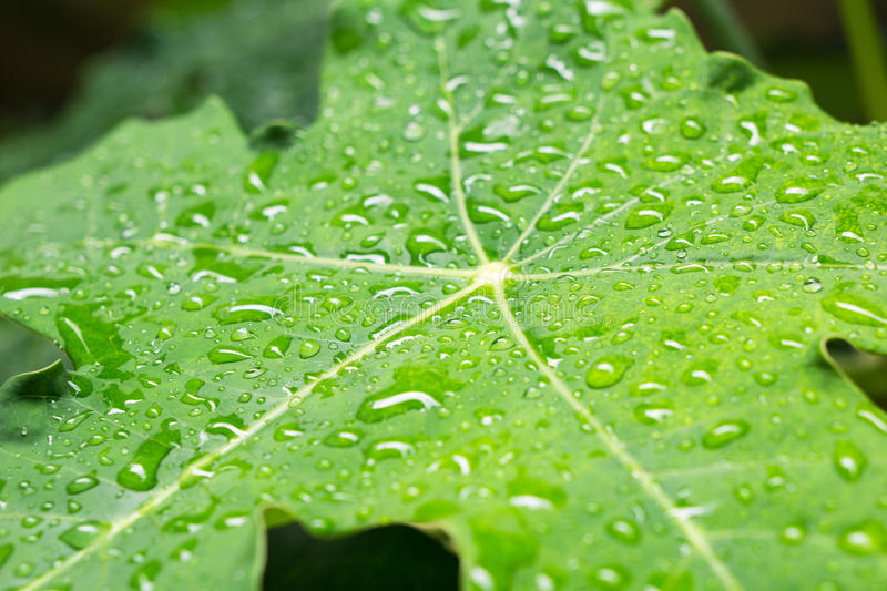 Fresh green leaf with water droplets. stock photo