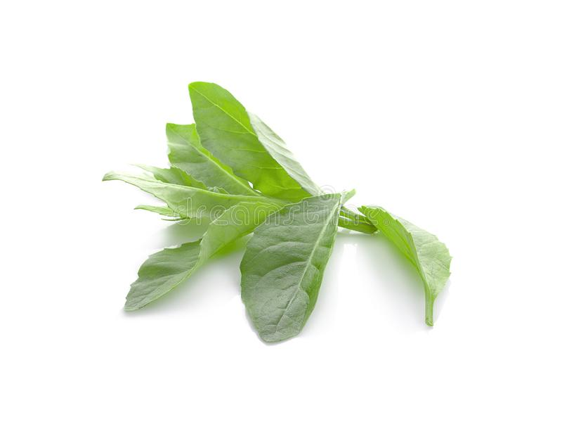 Fresh green leaf on white background stock photography