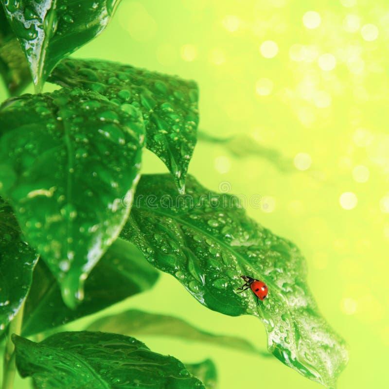 Free Fresh Green Leaves Stock Image - 18255641