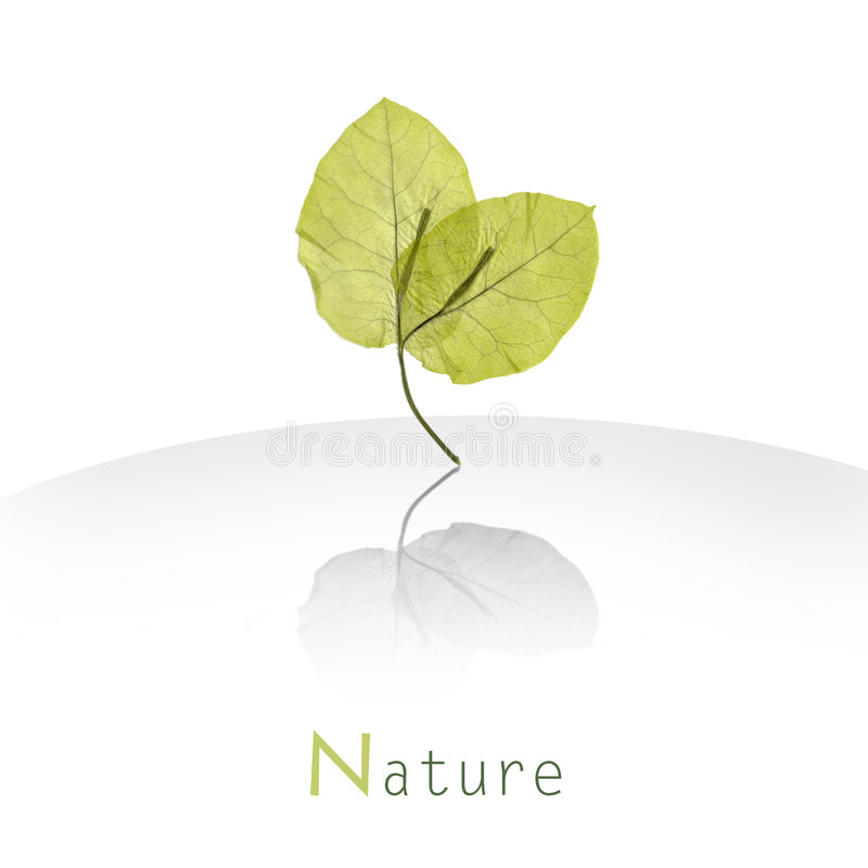 Fresh green leaves. Nature background- fresh green leaves standing vertically with reflection on white