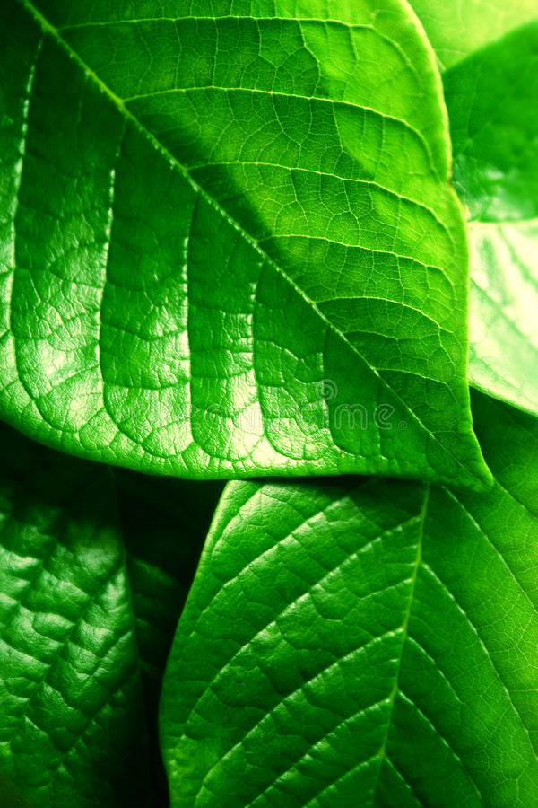 Download Fresh green leaves stock image. Image of colorful, macro - 9355245